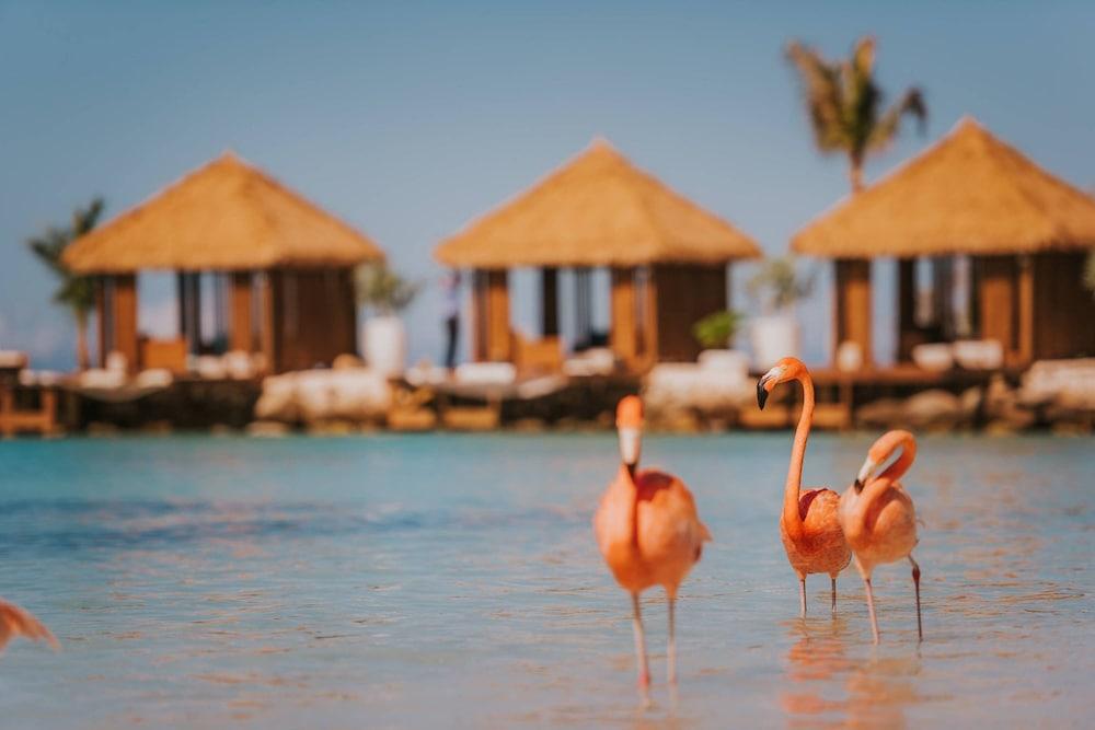Renaissance Aruba Resort & Casino, Imagen destacada