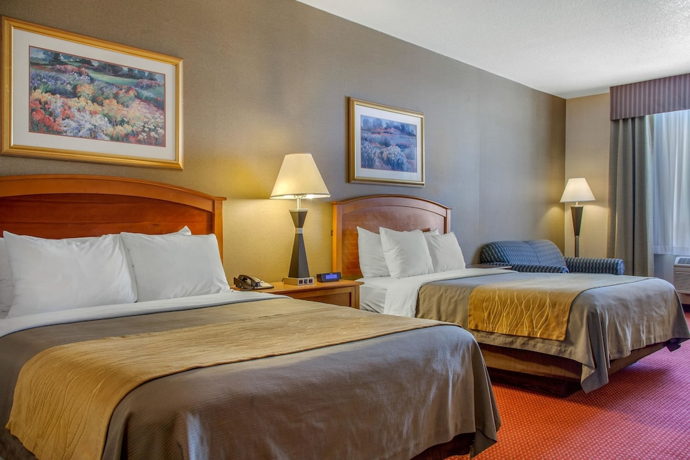 컴포트 인 & 스위트(Comfort Inn And Suites) Hotel Image 15 - Guestroom