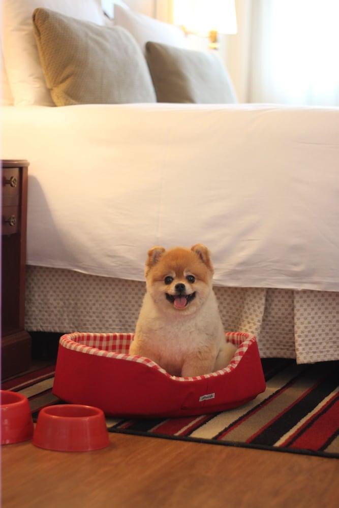 允許攜帶寵物