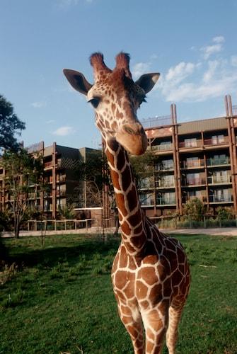 Disney's Animal Kingdom Lodge image 45