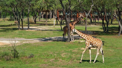Disney's Animal Kingdom Lodge image 24