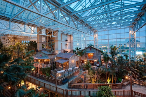 Gaylord Palms Resort & Convention Center image 3