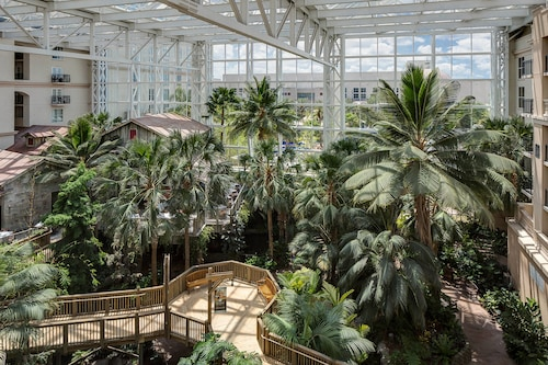 Gaylord Palms Resort & Convention Center image 25