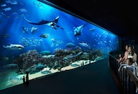Deluxe Family Room (Free Attraction Tickets for 2 Adults)