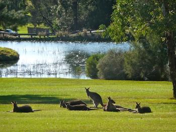 Kangaroo Valley Timber Cabin - Property Grounds  - #0