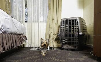 Room, 2 Queen Beds (West Room Pet Friendly)