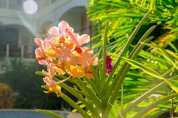 Alona Northland Resort Bohol Garden