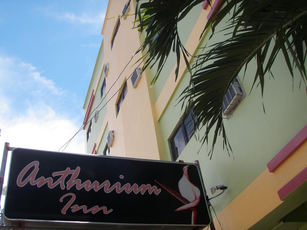 アンスリウム イン