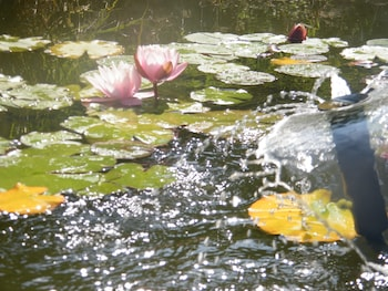 Agriturismo Poggio Alle Lame - Fountain  - #0