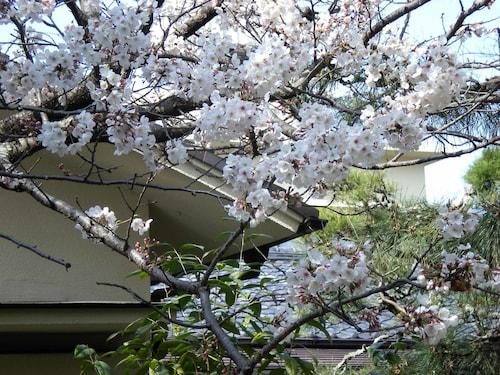 Hotel Hagoromo, Shizuoka