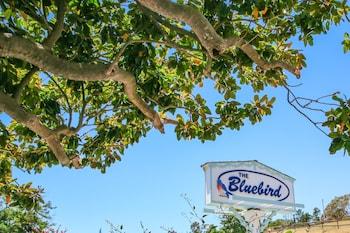 藍鳥旅館 Bluebird Inn