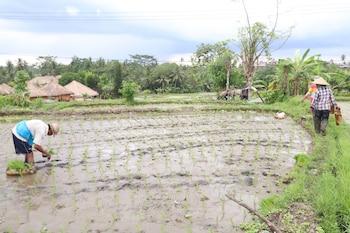 Pondok Permata Homestay - Property Grounds  - #0