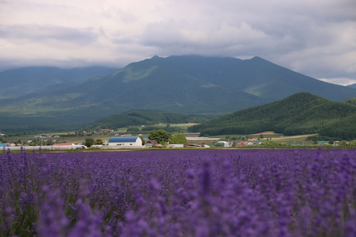 Furano Shiyuirin, Kamifurano