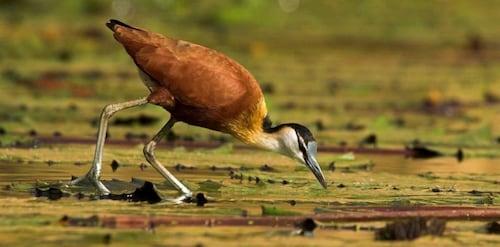 Tanji Bird Reserve Eco-lodge - Adults Only, Kombo Saint Mary