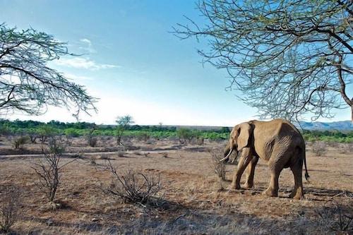 Samburu Intrepids Camp, Isiolo North