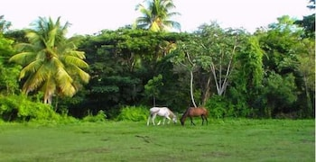 Casa de Vieques - View from Hotel  - #0