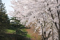 豪華雙人房, 河景 (SpringPKG - 2Buffet,2Sauna,2w.drink)
