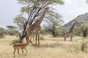 Junior Suite Safari Experience (2+1)