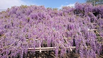 KYOUNOYADO SENKAKUBETTEI Garden