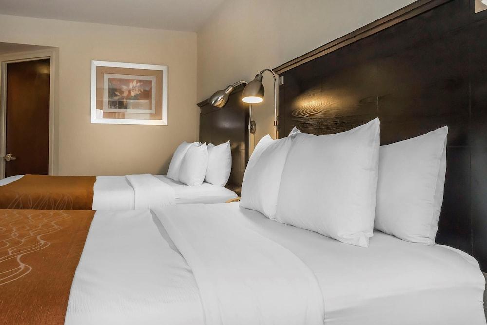 컴포트 인 & 스위트 라과디어 에어포트(Comfort Inn & Suites LaGuardia Airport) Hotel Image 11 - Guestroom