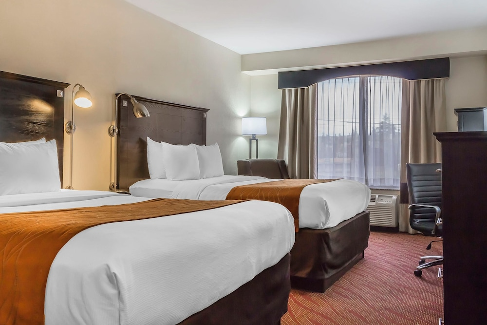 컴포트 인 & 스위트 라과디어 에어포트(Comfort Inn & Suites LaGuardia Airport) Hotel Image 45 - Guestroom