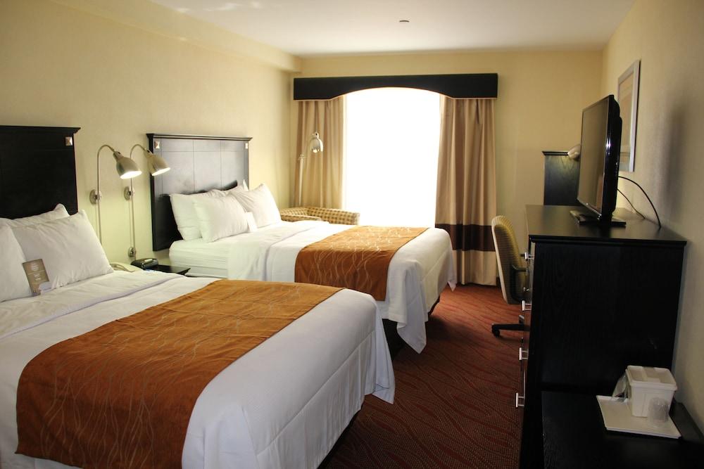 컴포트 인 & 스위트 라과디어 에어포트(Comfort Inn & Suites LaGuardia Airport) Hotel Image 5 - Guestroom