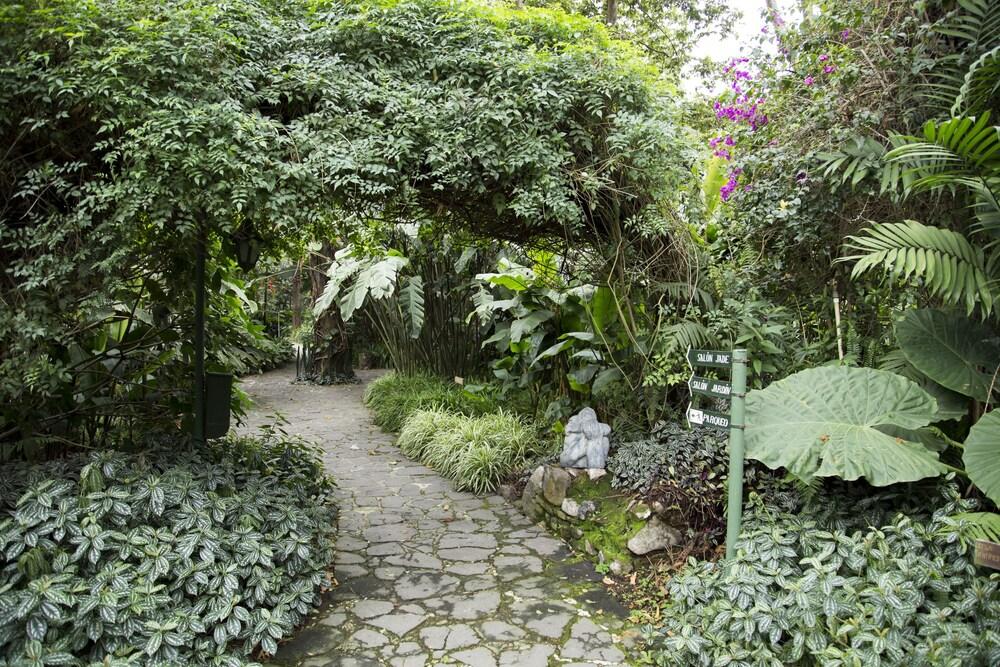 호텔 라스 파롤라스(Hotel Las Farolas) Hotel Image 54 - Garden