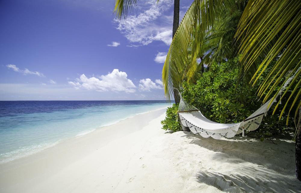 미리히 아일랜드 리조트(Mirihi Island Resort) Hotel Image 84 - Beach