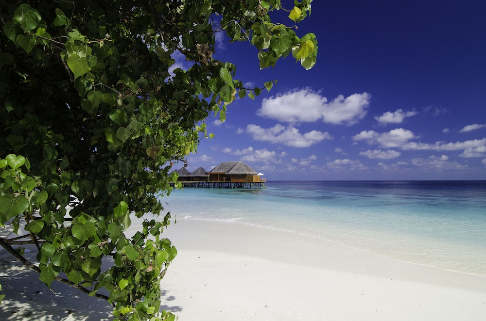미리히 아일랜드 리조트(Mirihi Island Resort) Hotel Image 86 - Beach