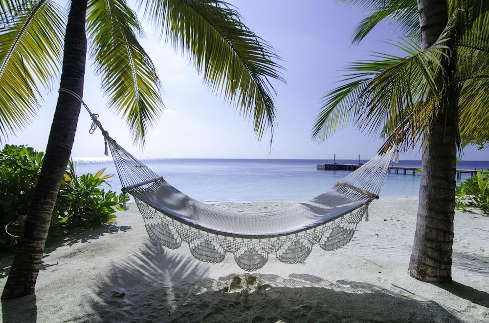 미리히 아일랜드 리조트(Mirihi Island Resort) Hotel Image 88 - Beach