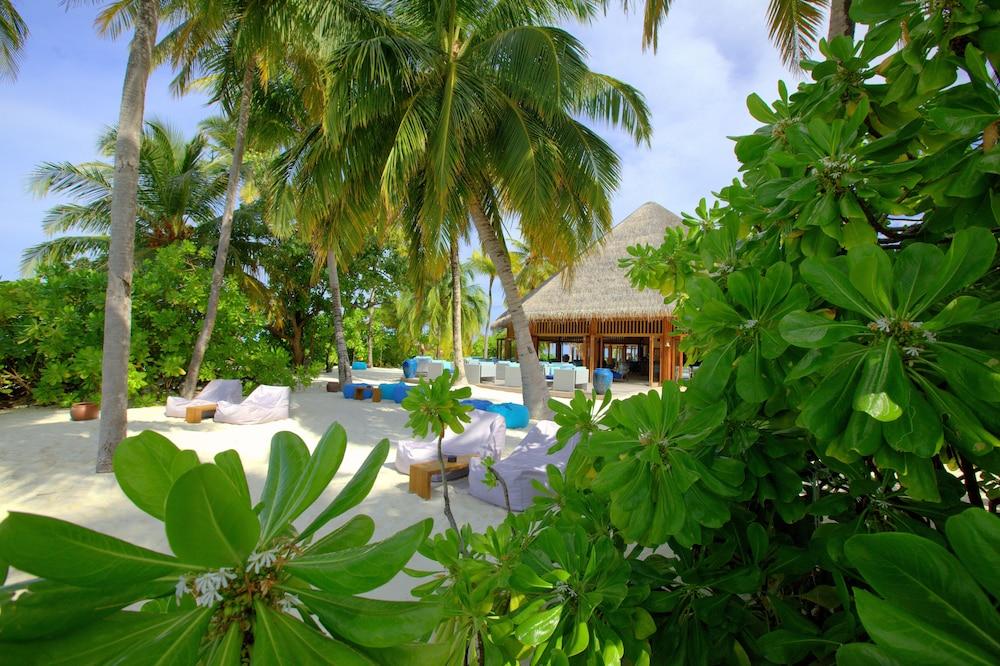 미리히 아일랜드 리조트(Mirihi Island Resort) Hotel Image 73 - Hotel Bar