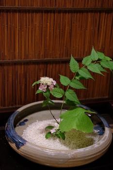 TOSHIHARU RYOKAN Interior