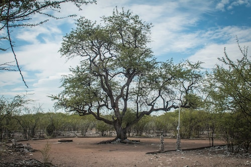 Thakadu Bush Camp, Ghanzi