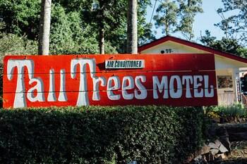 大樹汽車旅館 Tall Trees Motel
