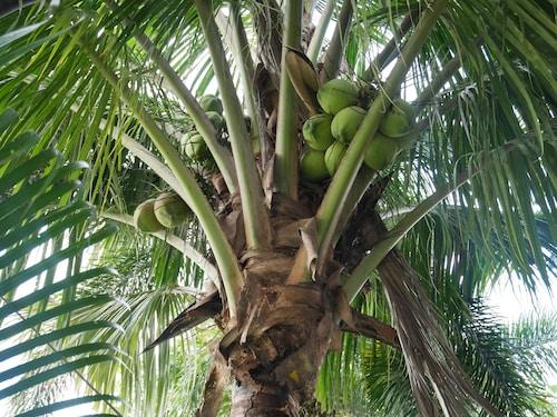 Baan Suan Palm Resort, Muang Uttaradit
