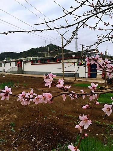 Gu Se Gu Xiang, Beijing