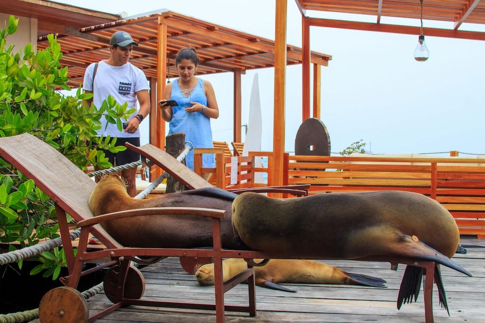 레드 맹그로브 바이 하우간 크루지즈(Red Mangrove by Haugan Cruises) Hotel Image 27 - Sundeck