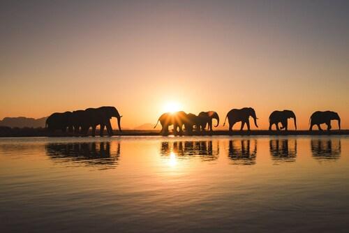 . Jabulani Safari