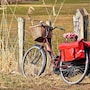 The thumbnail of Bicycling large image