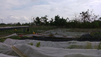 CALIRAYA ECOVILLE RECREATION AND FARM RESORT Property Grounds