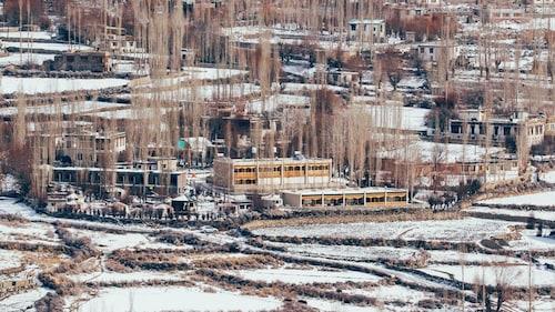 . Ladakh Sarai Resort