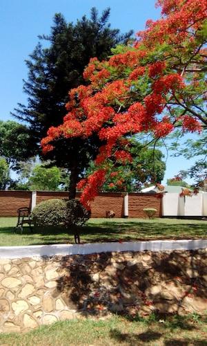 Sheila's lodge, Lilongwe City