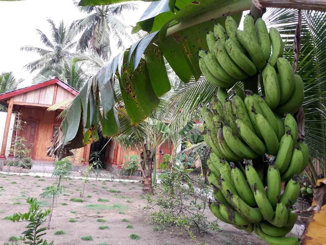 Coconut Homestay, Mỏ Cày