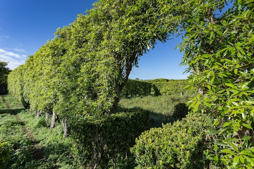 Quinta do Paraizo, Ribeira Grande
