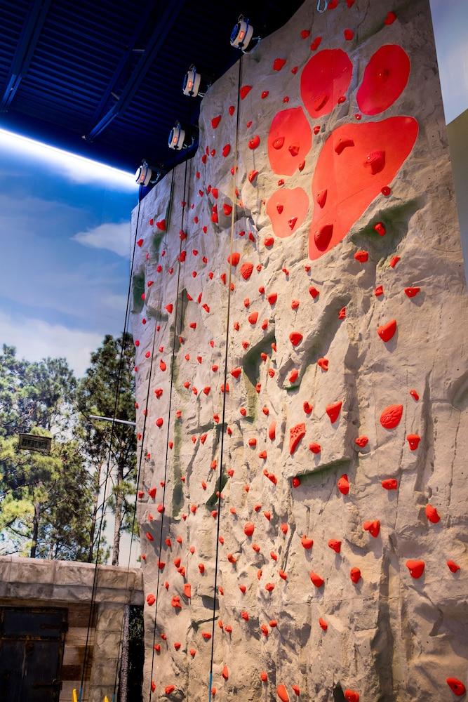 攀岩牆 - 室內