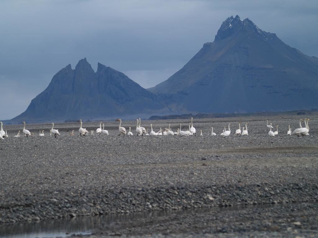 Brekka í Lóní Farm Stay, Sveitarfélagið Hornafjörður