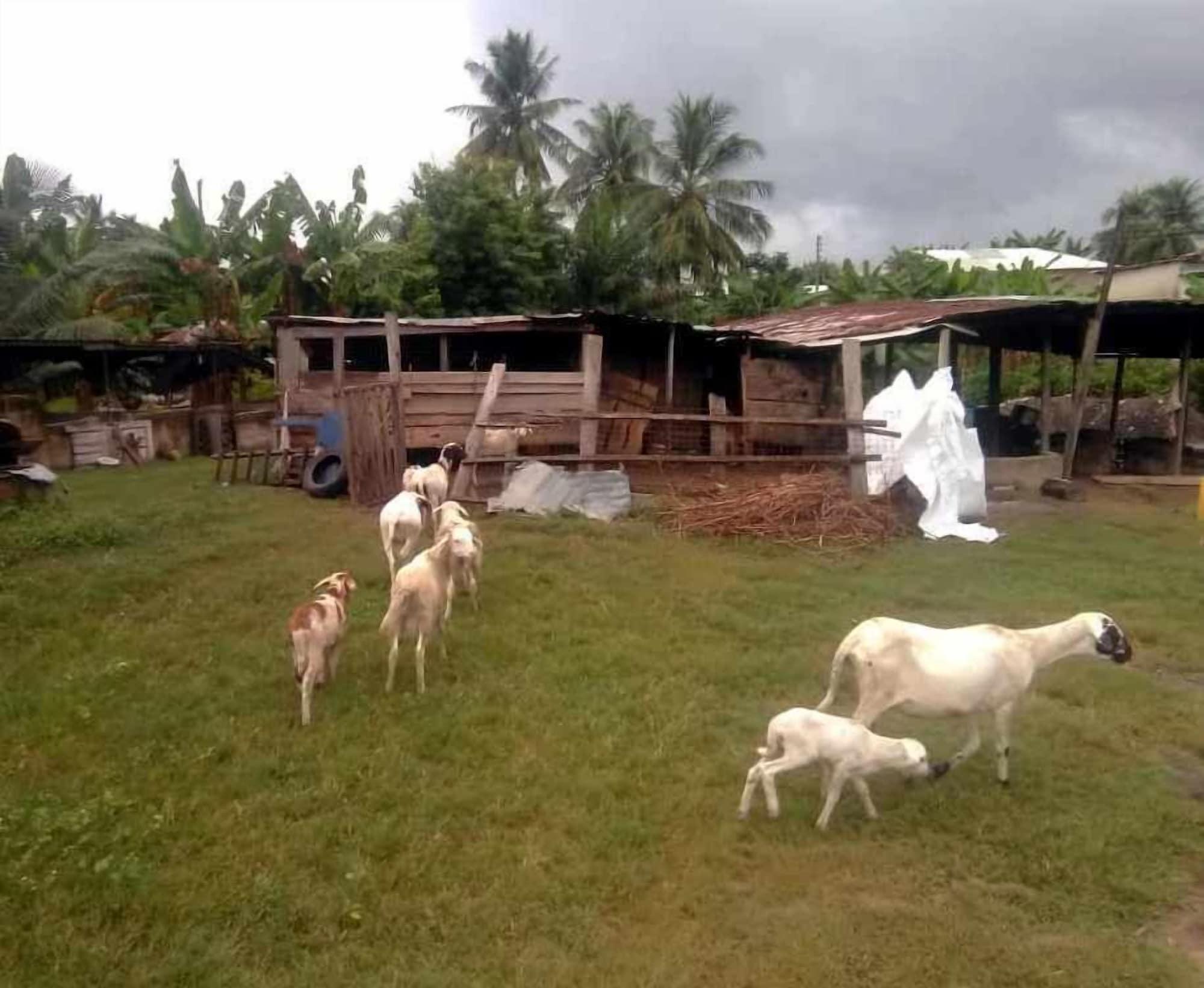 Aeonex Farms, Awutu Efutu Senya