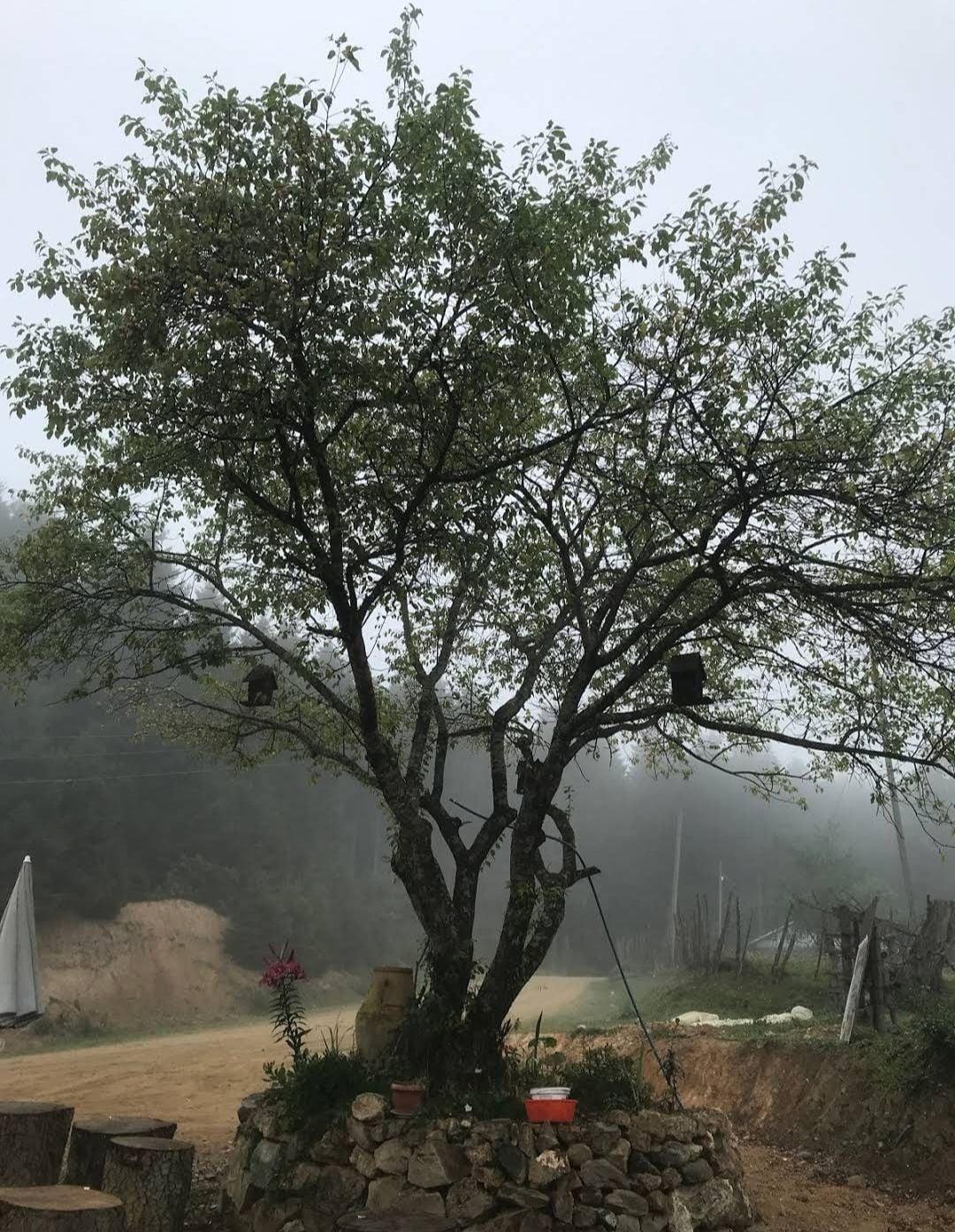Cam Isigi Pansiyon, Dereli