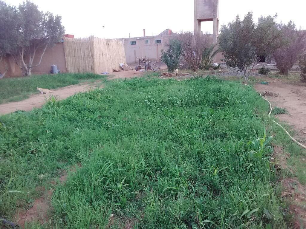 Maison  d'Hôte Sahara La Belle Vue, Guelmim