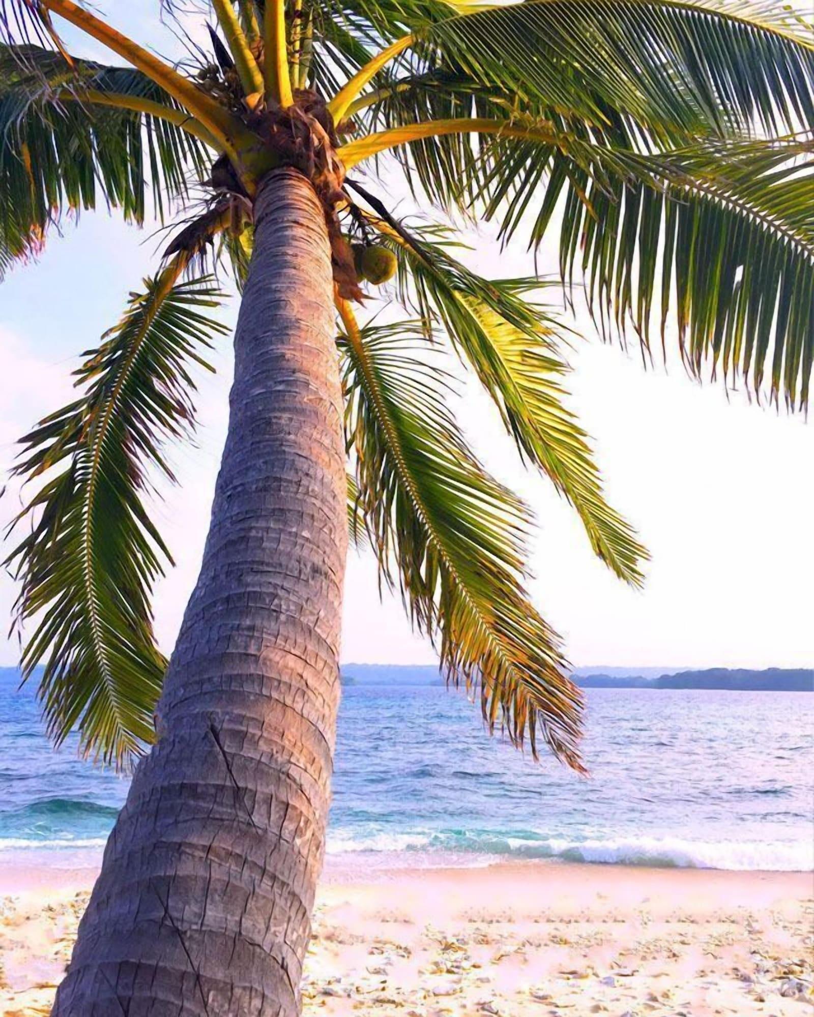 Dany Island, South East Santo